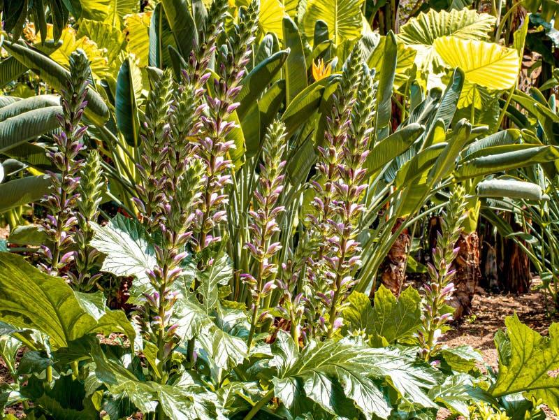 De botanische tuin met wild-kweekt draagt kulassen stock afbeelding