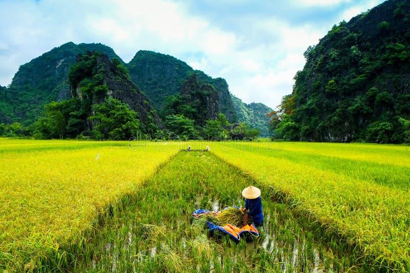 De boten van de holtoerist in Tam Coc, Ninh Binh, Vietnam royalty-vrije stock afbeelding
