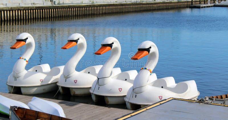De boten van het zwaanpedaal stock afbeeldingen