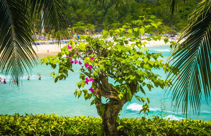 De bougainvillea en de palmen van Bush op de kust royalty-vrije stock foto