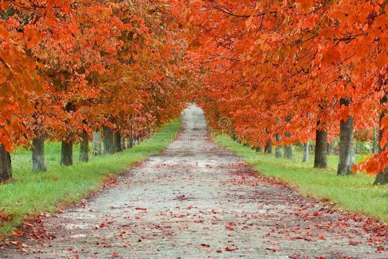 De Boulevard van de herfst stock foto's