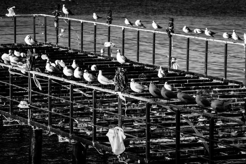 De Bouw Pier On Seaside van het Desolatedstaal stock foto's