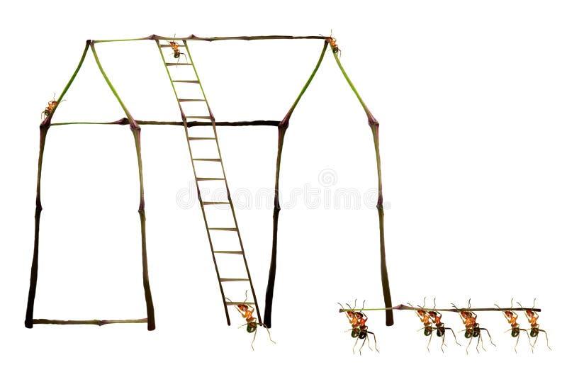 De bouw van mieren stock foto