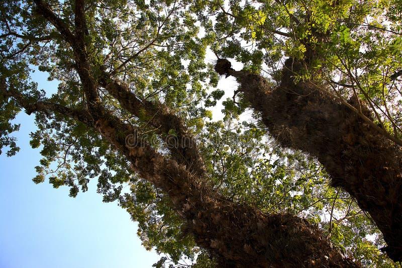 De bovenkant van de boom stock afbeeldingen