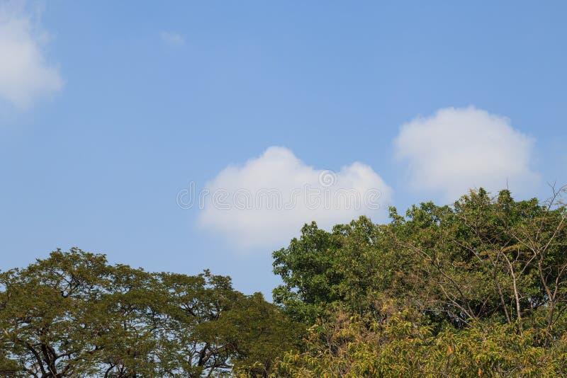 De bovenkant van de boom royalty-vrije stock afbeeldingen