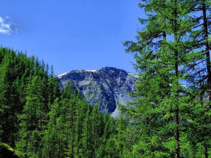 De bovenkant van de rots over groen hout. royalty-vrije stock fotografie