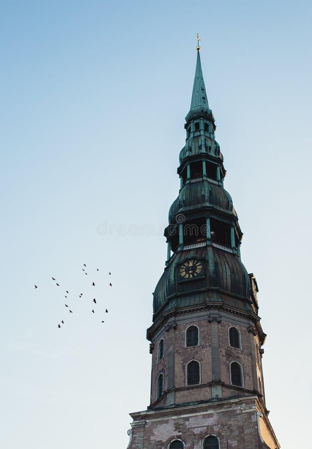 De bovenkant van een clocktower met groene bovenkant en vogels die daarna het vliegen royalty-vrije stock foto
