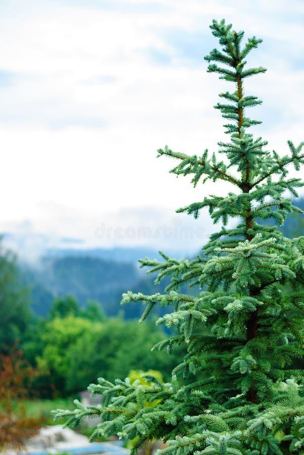 De bovenkant van de Kerstboom op de achtergrond van bergen in de mist royalty-vrije stock foto's