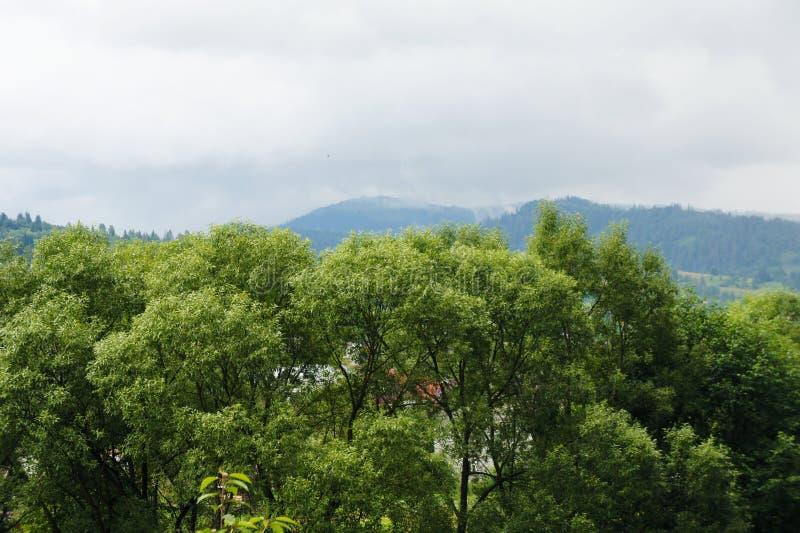 De bovenkanten van de bomen en de hemel, de bergen zijn blauw boslandschap in de afstand De Oekraïne, de Karpaten royalty-vrije stock fotografie