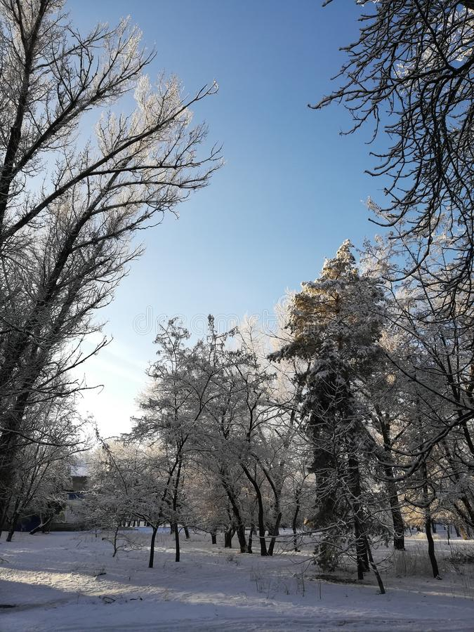 De bovenkanten van de bomen op een de winterochtend stock afbeeldingen