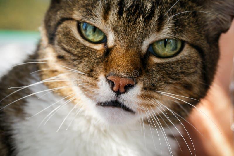 De boze binnenlandse kat ziet omhoog eruit royalty-vrije stock afbeelding