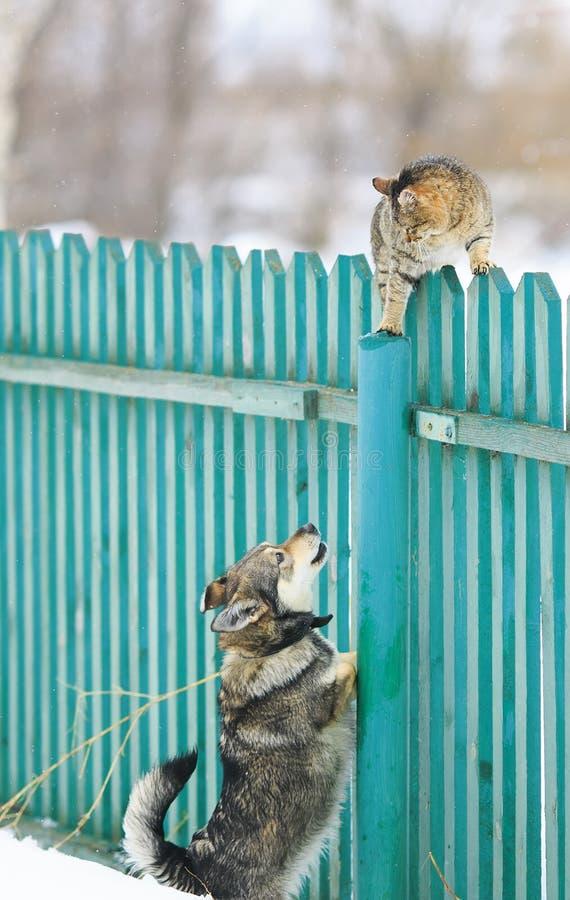 De boze hond achtervolgde de kat op een hoge houten omheining in het dorp royalty-vrije stock fotografie