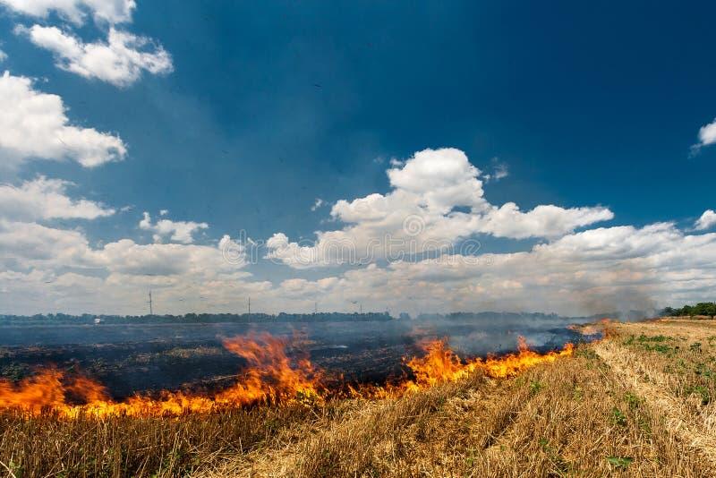 De brand brandt stoppelveld op het gebied vernietigt de zomer stock afbeeldingen