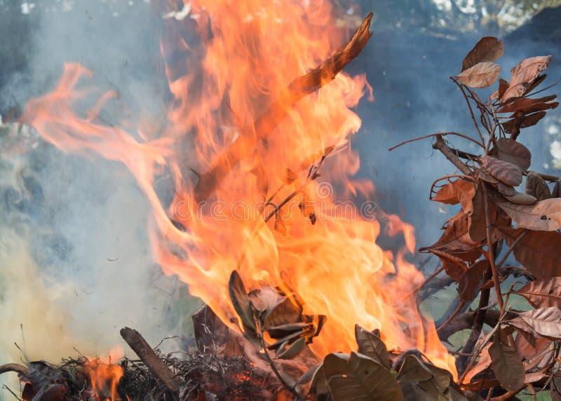 De brand brandt, zijn de bladeren droog royalty-vrije stock foto