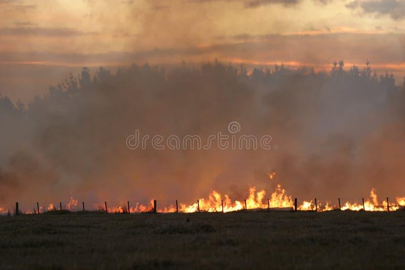 De brand van het stoppelveld bij Schemer stock foto's