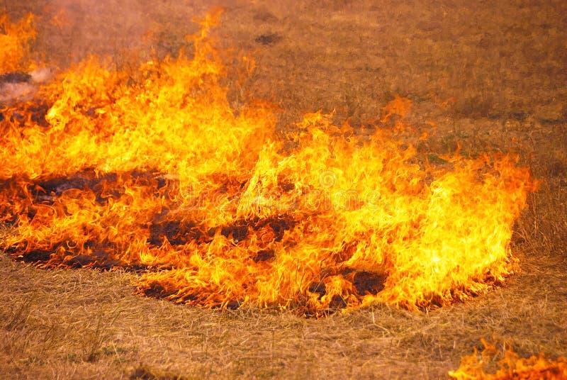 De Brand van het Stoppelveld van de haver royalty-vrije stock afbeelding