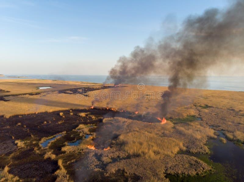 De brand vernietigt de gebieden van droog riet langs de kust van het overzees De mening van het vogel` s oog stock afbeelding