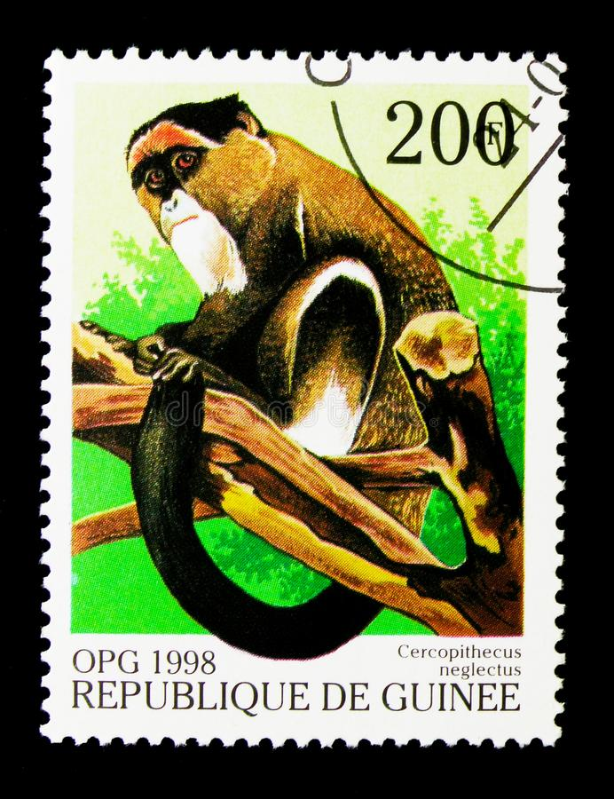 De Brazza's Monkey (Cercopithecus neglectus), Monkeys serie, cir. MOSCOW, RUSSIA - NOVEMBER 26, 2017: A stamp printed in Guinea shows De Brazza&# stock photo