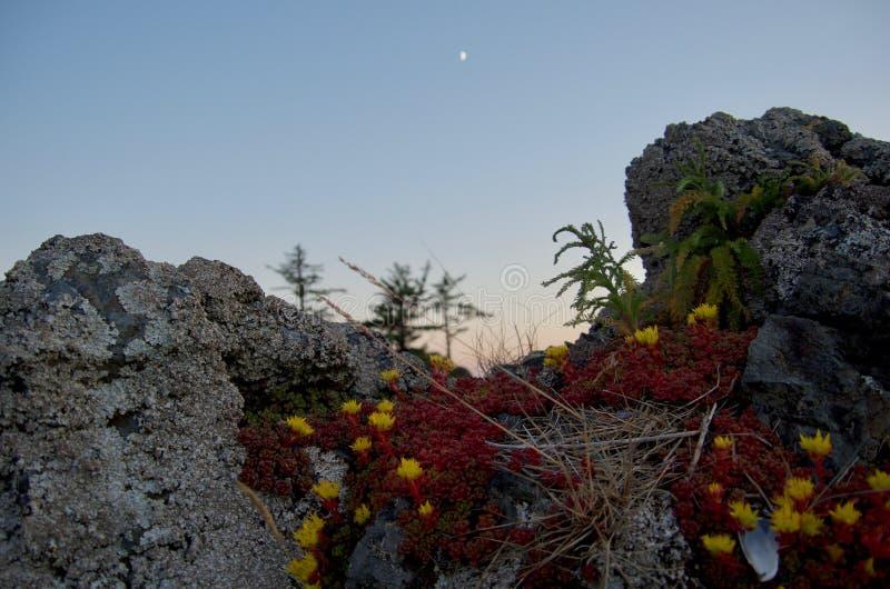 De brede hoek van korstmos behandelde rotsen met rode sedums en maan en zonsondergang op achtergrond stock fotografie