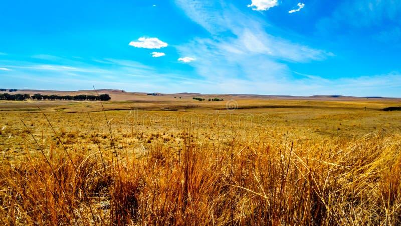 De brede open landbouwgrond en de verre bergen langs N3 tussen Hoofd en Villiers in de Vrije provincie van de Staat stock foto's