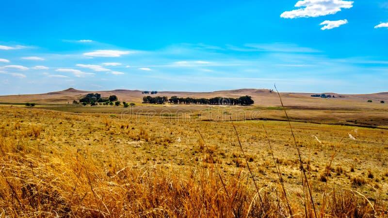 De brede open landbouwgrond en de verre bergen langs N3 tussen Hoofd en Villiers in de Vrije provincie van de Staat royalty-vrije stock foto