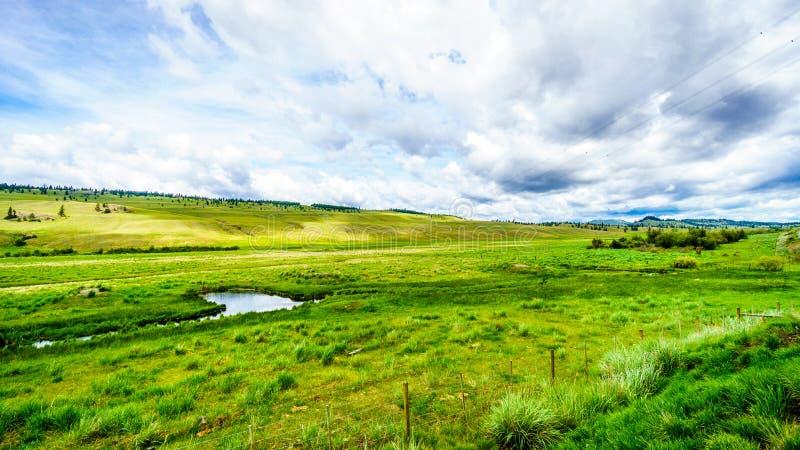 De brede open weiden en de rollende heuvels van Nicola Valley stock foto