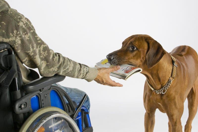 De brengende krant van de hond stock afbeeldingen