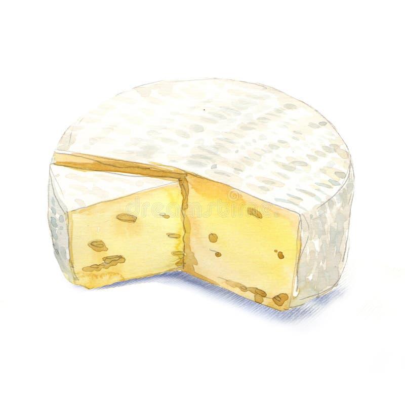 De Brie van de waterverfkaas op een witte achtergrond stock illustratie