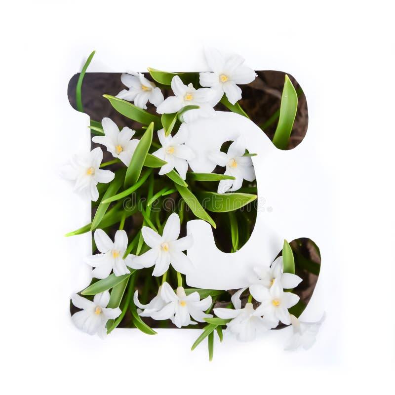 De brief E van het Engelse alfabet van kleine witte bloemen royalty-vrije stock foto's