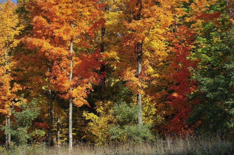 De briljante kleuren versieren de herfstgebladerte in New England royalty-vrije stock afbeelding