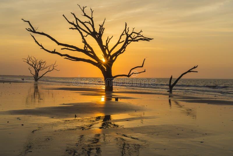De briljante zonnestraal verlicht Edisto-Eilandstrand op Edisto-Eiland dichtbij Charleston, Sc stock afbeelding