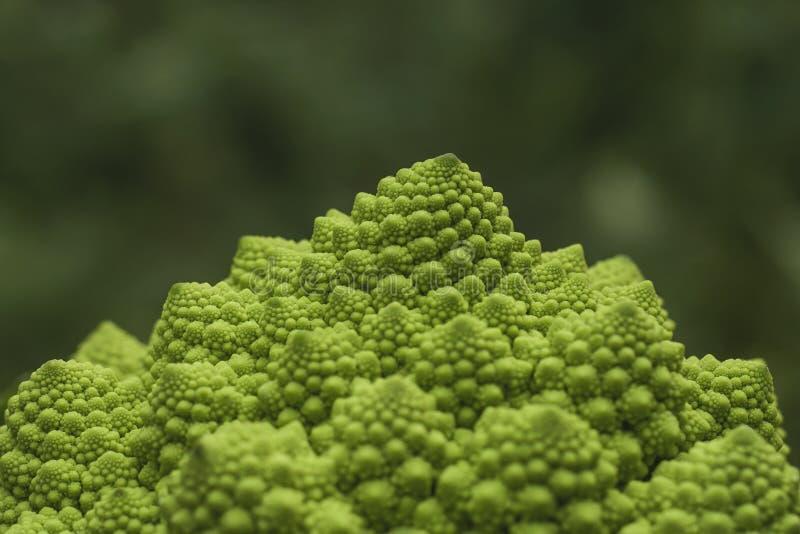 De broccoli van Romanesco stock afbeelding