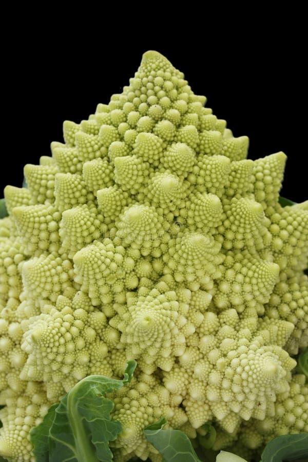 De broccoli van Romanesco, roman bloemkool stock afbeelding