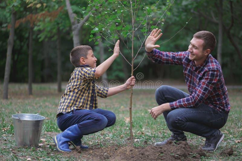 De broers planten een boom in de tuin Het familiewerk Een geplante boom in het bos stock afbeeldingen