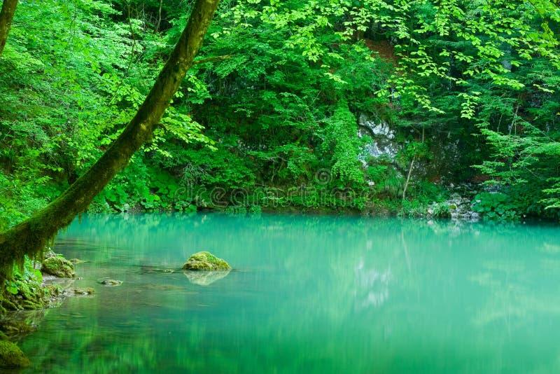 De bron van de rivier Kupa in bos stock afbeelding