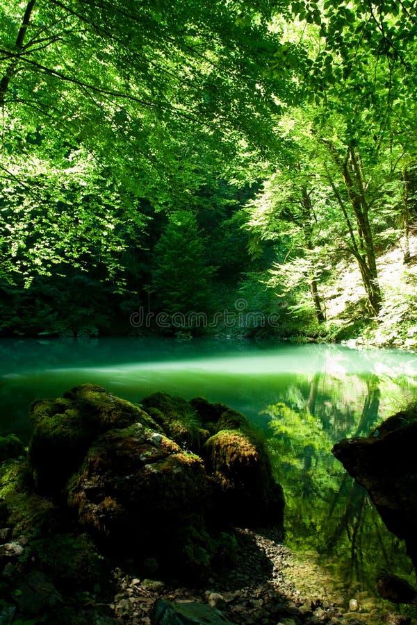 De bron van de rivier Kupa in bos stock foto's