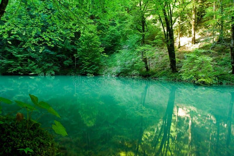 De bron van de rivier Kupa in bos stock foto