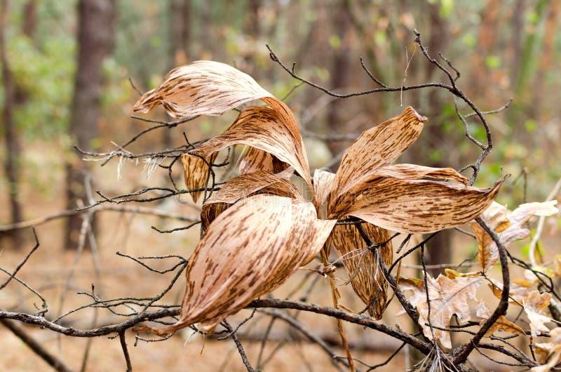 De Brown hojas secas de largo imagen de archivo libre de regalías
