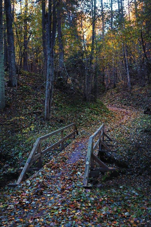 De brug over het ravijn in de herfstbos bij nacht stock fotografie