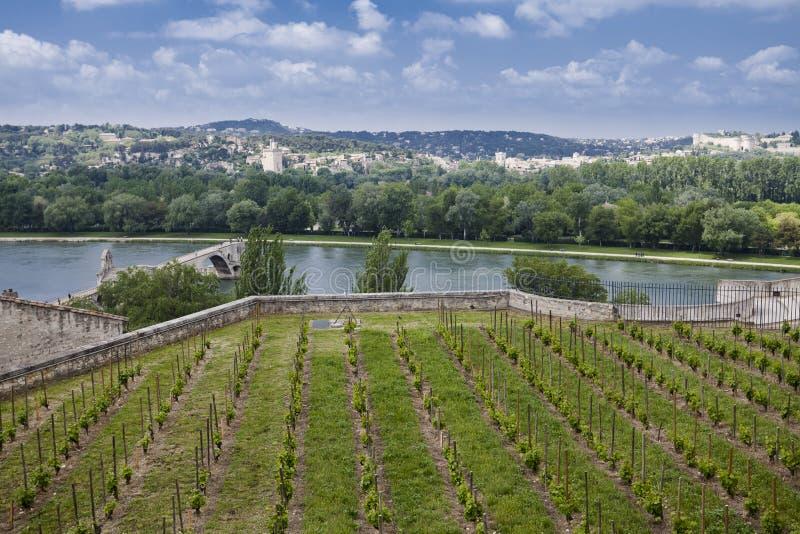 De brug van Avignon royalty-vrije stock afbeelding