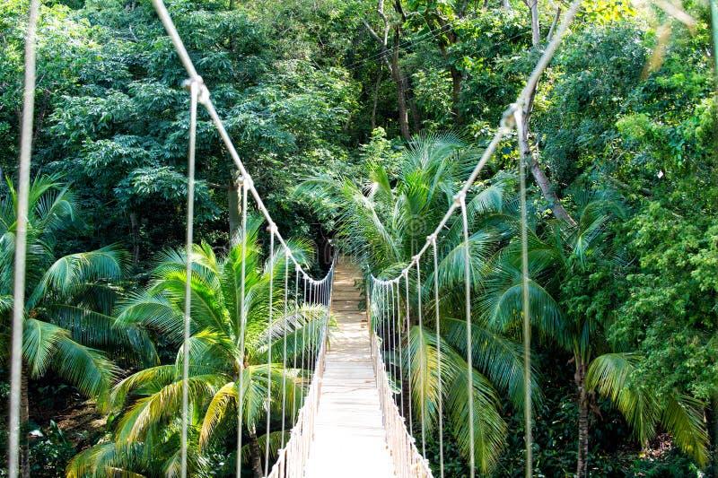 De brug van de wilderniskabel het hangen in regenwoud van Honduras stock fotografie