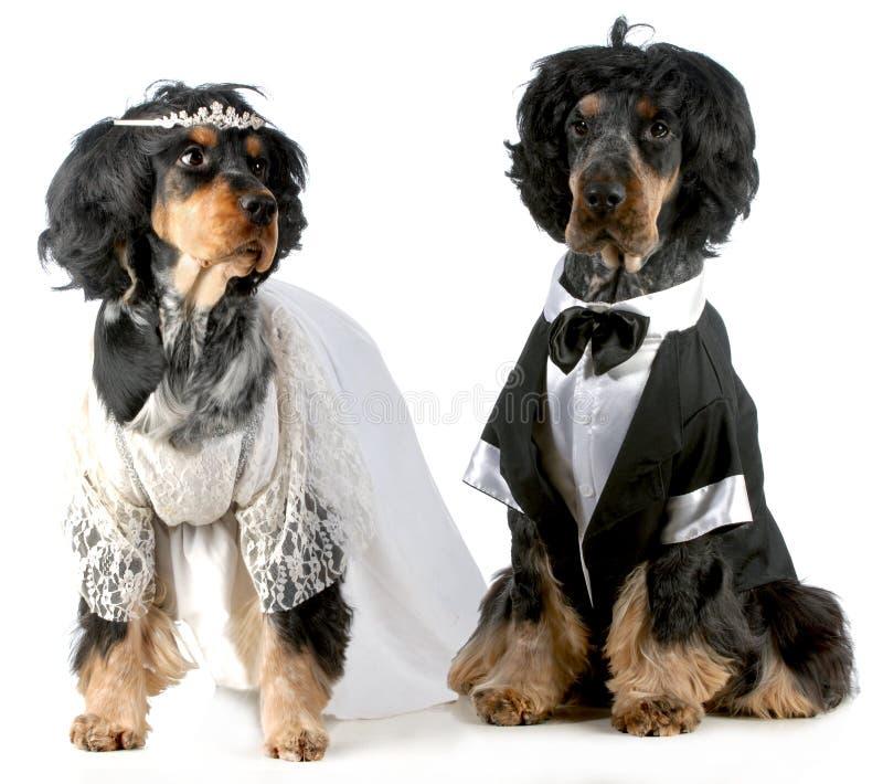 De bruid en de bruidegom van de hond royalty-vrije stock afbeeldingen