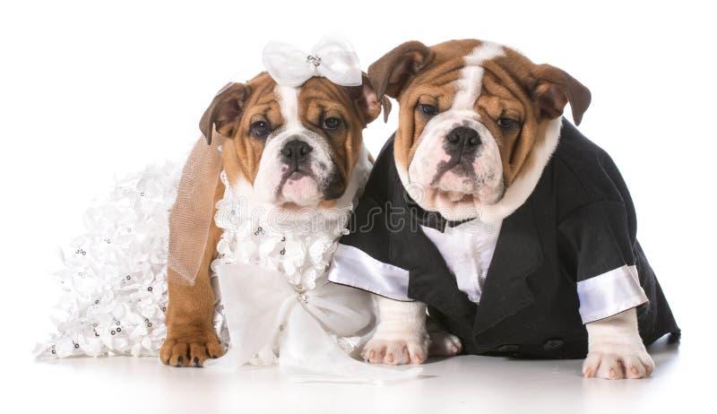 De bruid en de bruidegom van de hond stock afbeeldingen