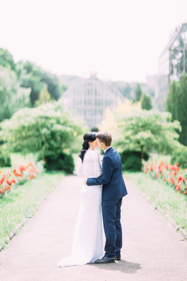 De bruidegom kust de bruid in de wang in het park De achtermening van gemiddelde lengte royalty-vrije stock foto