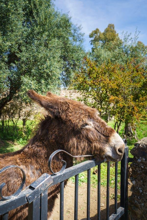 De bruine ezel van Nice achter een ijzeromheining stock foto's