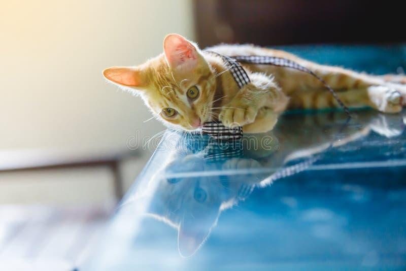 De bruine kat geniet van op glaslijst royalty-vrije stock afbeeldingen