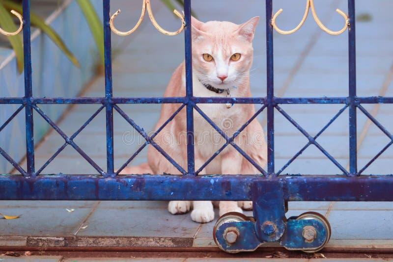 De bruine kat zit royalty-vrije stock foto's