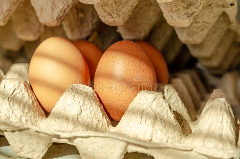 De bruine kippeneieren in kartondoos, sluiten omhoog royalty-vrije stock afbeelding