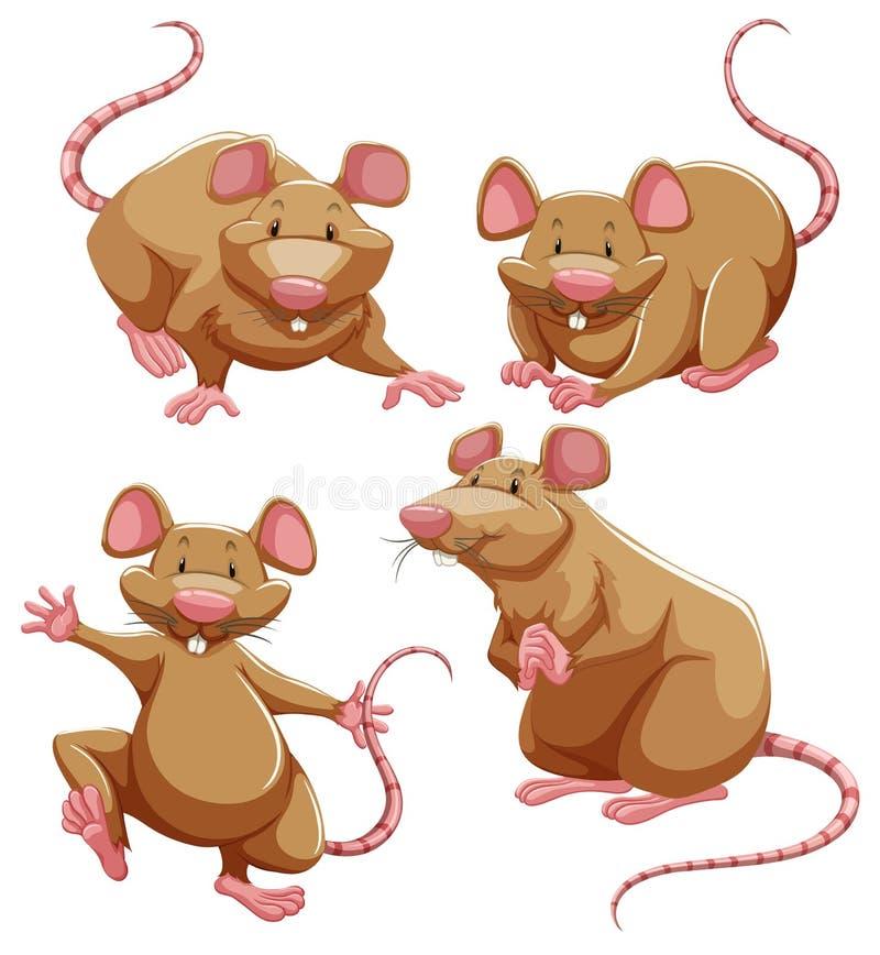 De bruine rat in verschillend stelt royalty-vrije illustratie