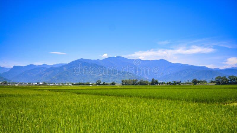 De bruine Weg is een weg die gouden padievelden met mooie schilderachtige montages doornemen stock foto's